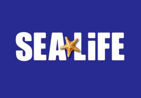 Job opportunity: Aquarium Displays Curator, County Wicklow, Ireland with Sea Life