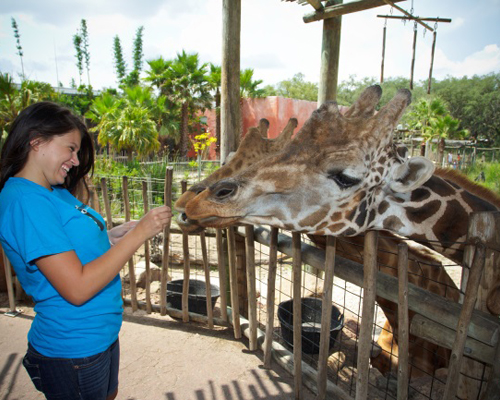 Gateway wins ticketing contract at Tampa zoo