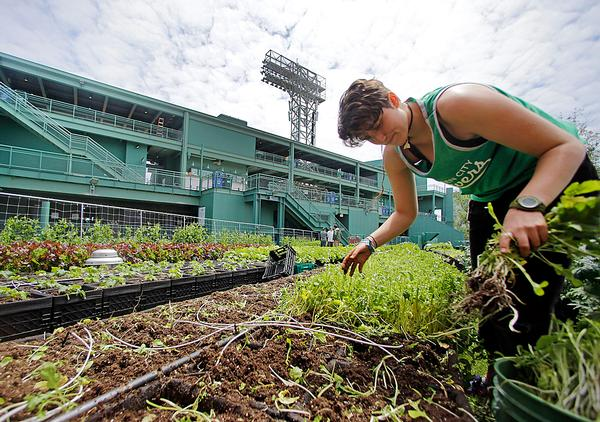 Fenway Park, Boston, US: The home of the Red Sox has a rooftop garden that grows vegetables and herbs to be used in the stadium's restaurants