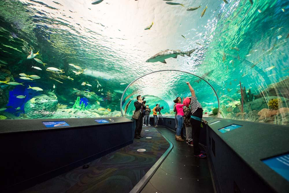 Visitors to a Ripley's aquarium enjoy travelling on the moving walkway / Ripley's