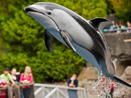 Vancouver Aquarium fighting proposed cetacean ban when it meets with Park Board later this month