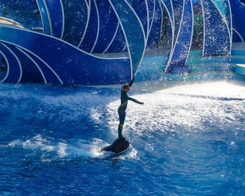 SeaWorld plan to end dolphin 'surfing' shows