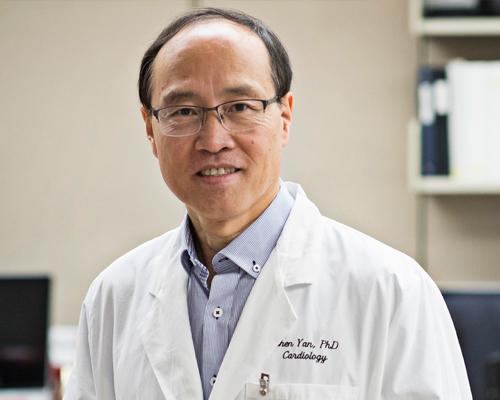 Professor Zhen Yan