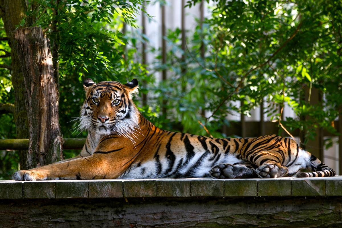 Dade City's Wild Things has been banned from possessing endangered tigers