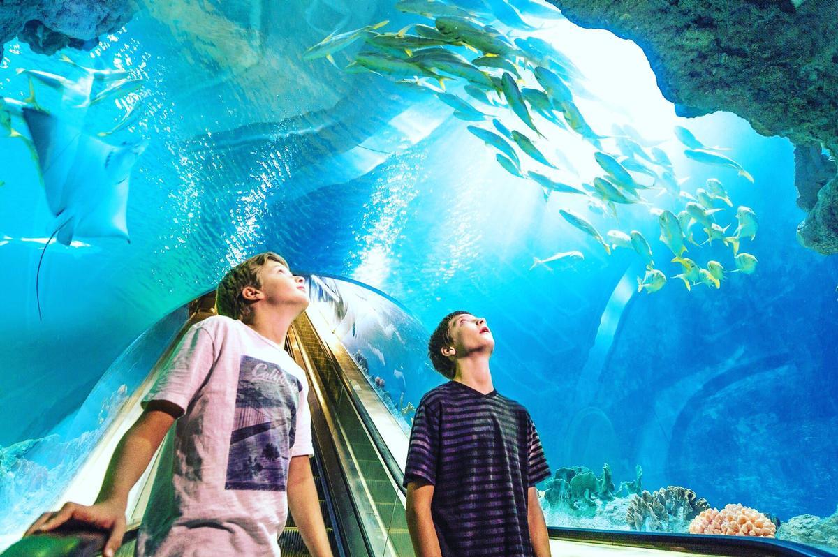 OdySea Aquarium is encouraging visitors to pre-book tickets to support the aquarium through its closure