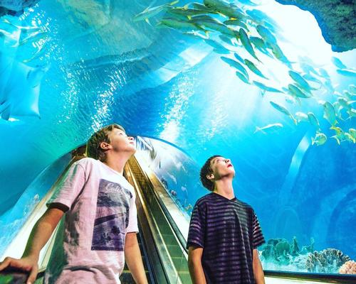 OdySea Aquarium entertains quarantined guests with new online initiatives
