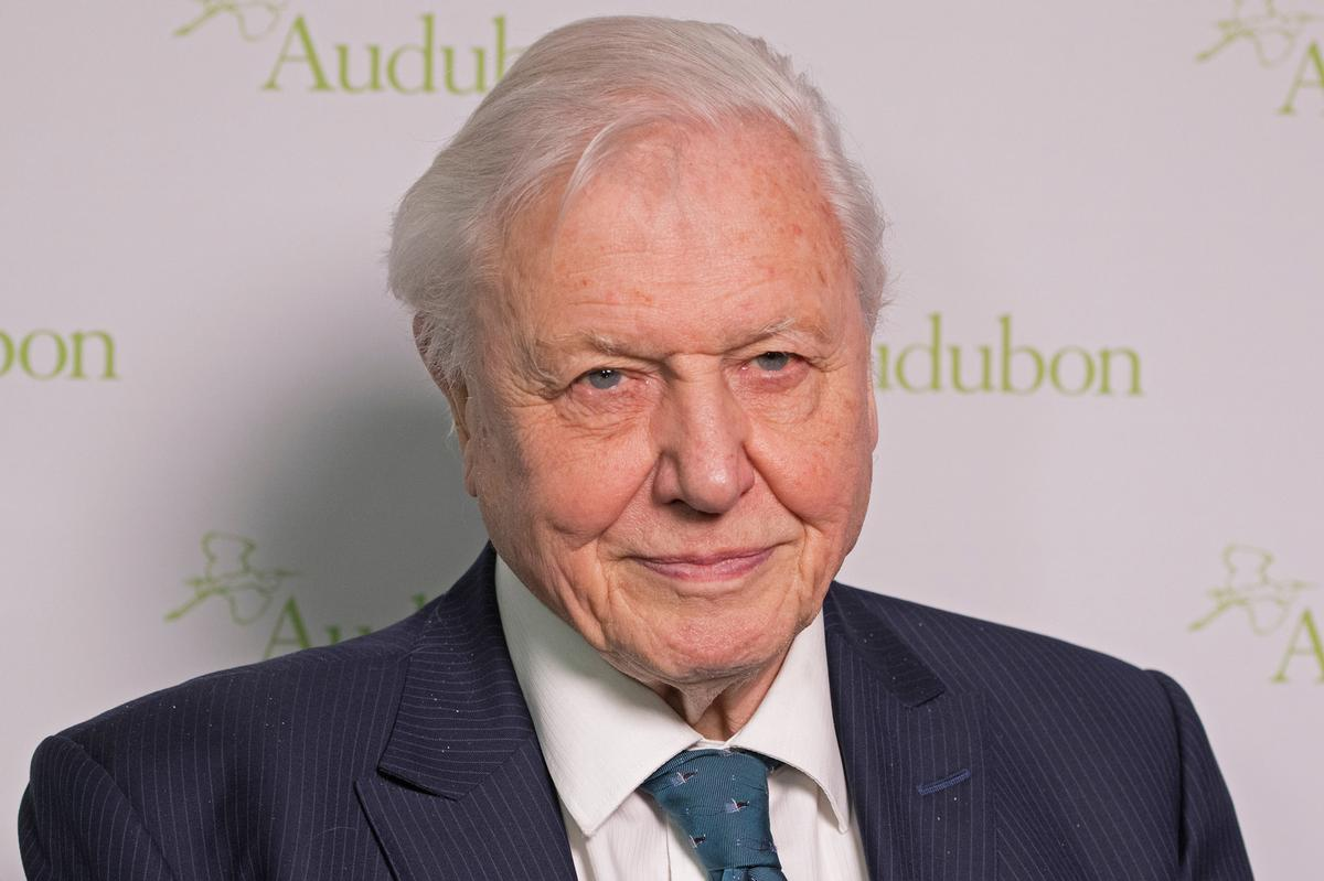 Fronted by Sir David Attenborough, The Green Planet app is part of the government's £28m 5G Create project / Shutterstock.com/lev radin