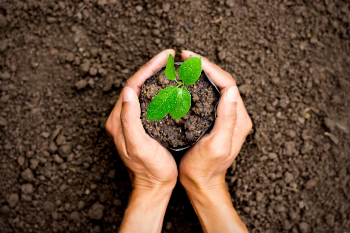 Comfort Zone contributes to biodiversity protection, environmental and social sustainability projects, by donating 1 per cent of its sales to the 1% for the Planet initiative. / Shutterstock/kram-9