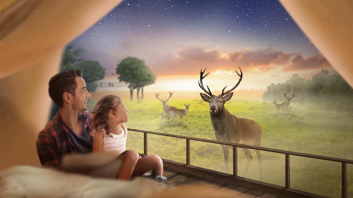 The lodges will offer views of red deer roaming in their habitat / Skanes Djurpark/Lund Gruppen