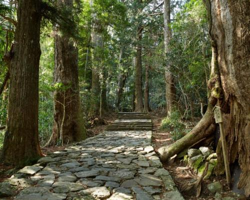 Aman launches healing forest bathing retreat in Japanese national park
