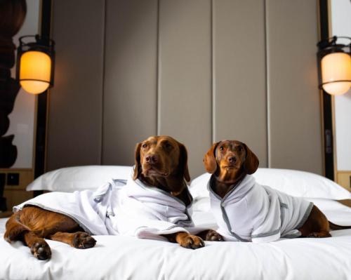 Pampered pooches: Nobu's London hotel introduces bespoke spa robes for dogs @NobuPortmanSq #TielleLoveLuxury #linen #spa #wellness #dogs #pets