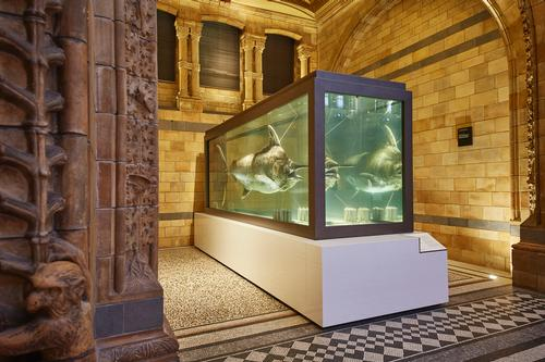 In addition to the whale's installation, new plinths and modern display cases have been installed to showcase objects from the museum's collection / NHM