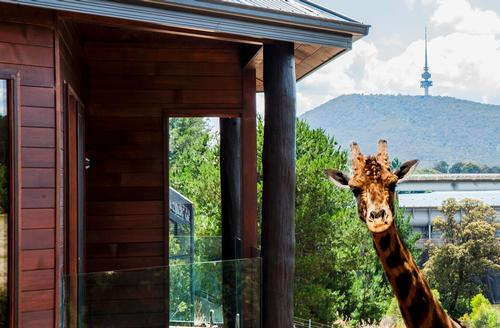 Canberra Zoo luxury lodges allow guests to take a walk on the wildside