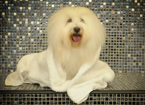 Dogs become divas at the new Dog Spa in Whitby / The Raithwaite Estate