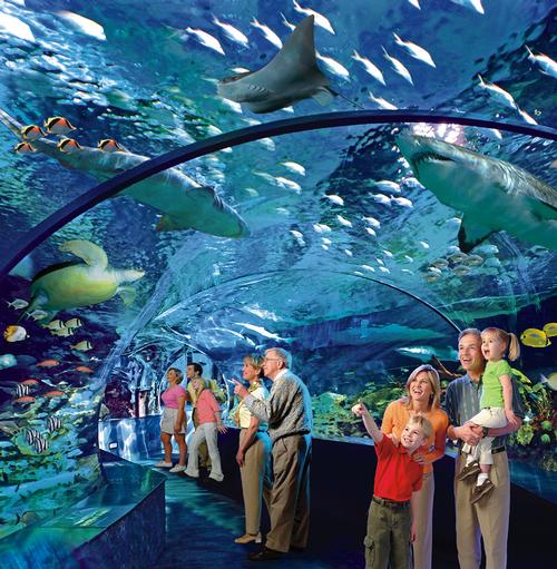 The aquarium's Shark Lagoon
