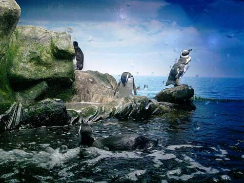 Aquario de Ubatuba is one of the schemes that Terramare worked on