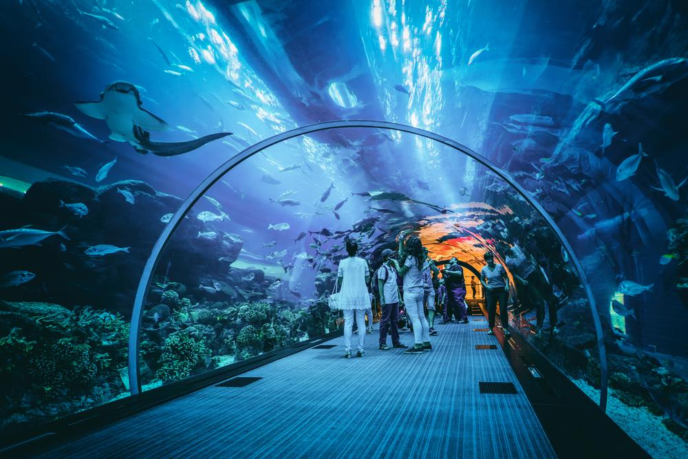 The EC is looking to get at least 200 aquariums on-board with the programme by 2019 / Shutterstock.com