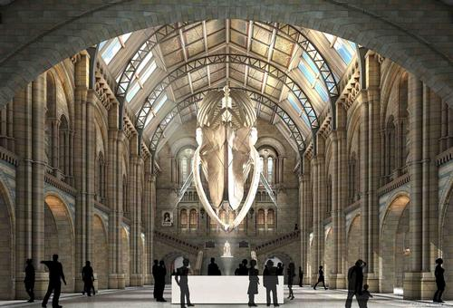 Blue whale ousts dino in battle for centre stage at Natural History Museum