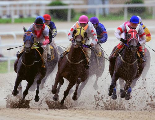 The KRA wants to develop a theme park which can improve the image of horse racing in South Korea / Korea Racing Authority