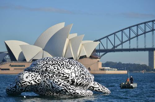 Giant turtle invades Sydney harbour as part of underwater art installation