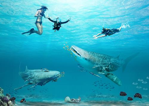 The park will include an aquarium where guests will be able to swim with whale sharks.