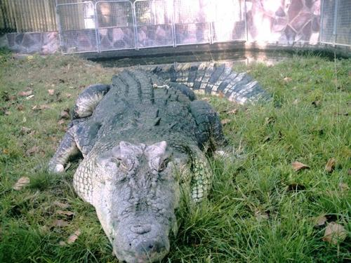 Cyprus plans crocodile farm as tourist lure
