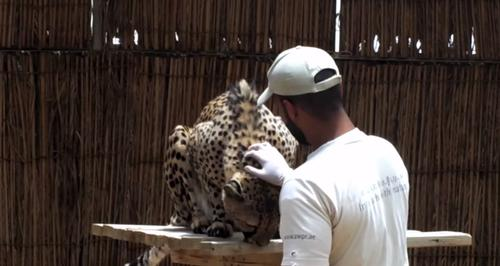 UK trainers lend expertise to UAE's Al Ain Zoo to run training scheme