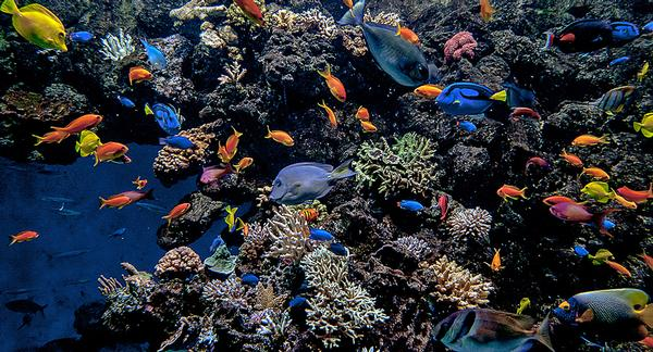 The coral reef is protected from predators by invisible walls