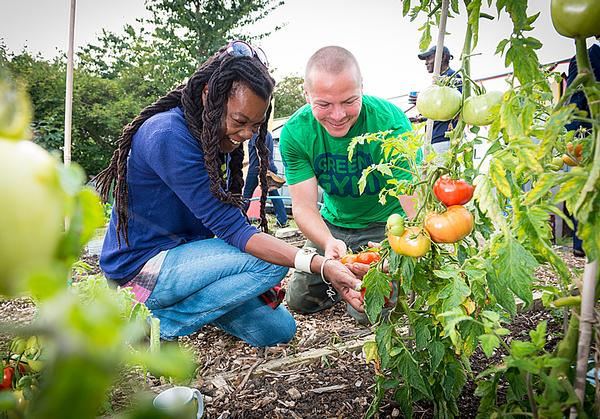 Green Gym volunteers see the fruits of their labours