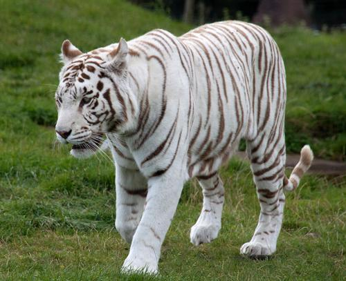 Indian zoo staff undergo training in wake of visitor death