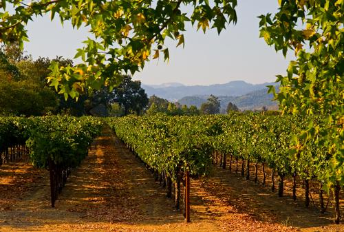 Starwood's Las Alcobas hotel to open in Q4 2015 in California's Wine Country