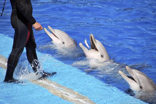 Jose Barbero (not pictured) is alleged to have kicked, hit and screamed at dolphins he trained in Spain / Shutterstock.com