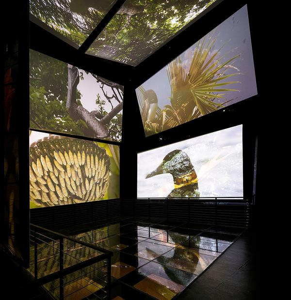 Biomuseo's first five galleries opened in October 2014, featuring  a range of interactive exhibits.  Three further galleries are planned
