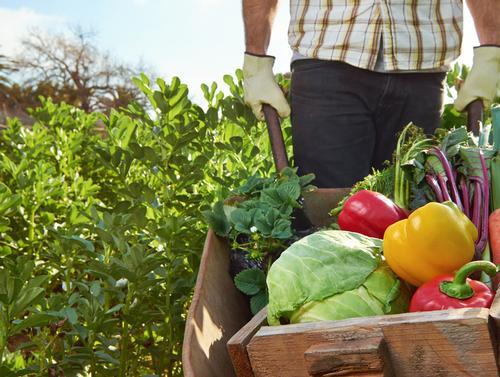 Hartman to publish consumer perceptions of 'organic' food report in Q3