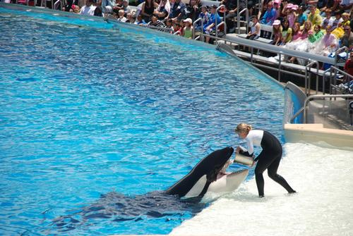 SeaWorld has claimed the Blackfish documentary is 'grossly one-sided' and the product of animal activists / Shutterstock/Irina Silvestrova