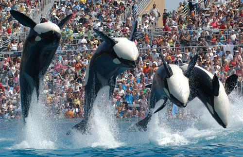 SeaWorld 'will not back down' against animal activists says executive