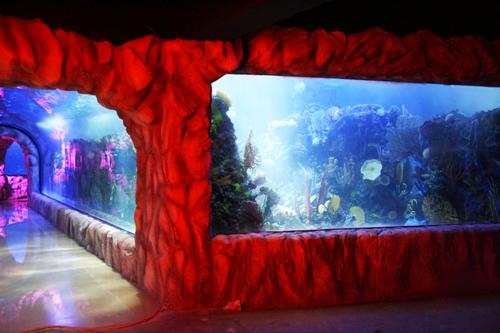 The aquarium delves deep underground and will eventually house 10,000 sea creatures / Inbursa Aquarium