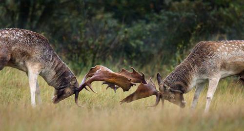Belarusian eco-tourism site to launch wildlife park