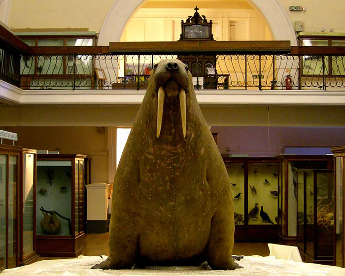 London museum selects Syx leisure management software