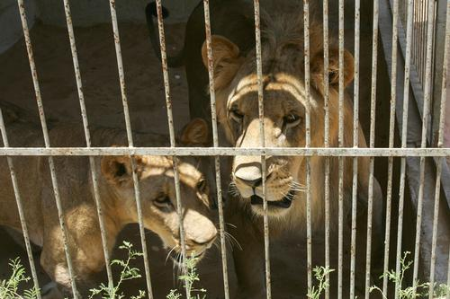 Israel-Palestine conflict claims lives of half the animals at Gaza zoo