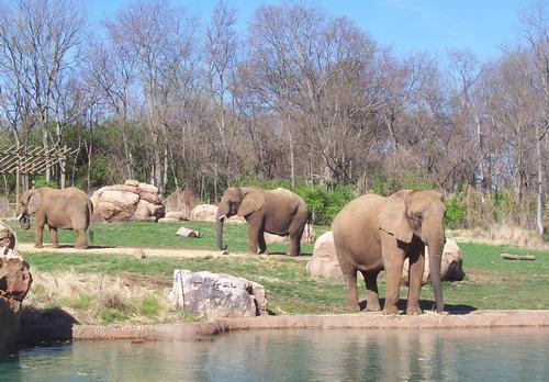 Nashville Zoo reveals addition to major expansion plans