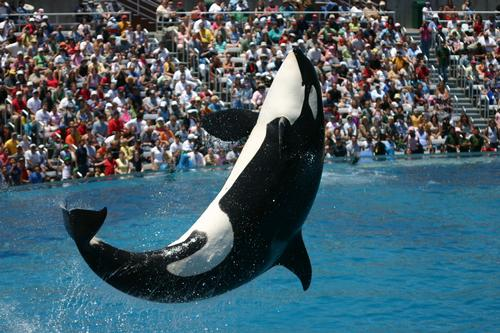 SeaWorld loses one million visitors in 2014