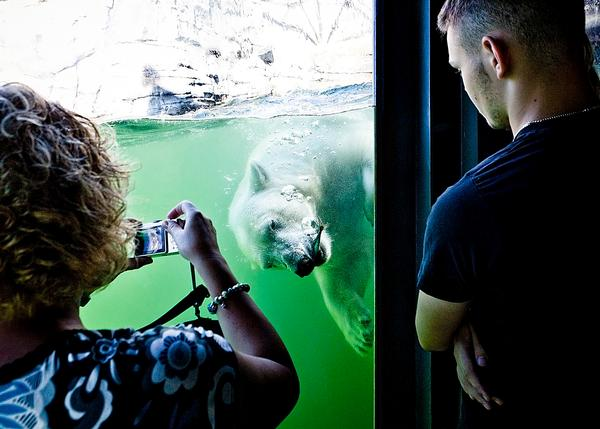 Kieran Stanley has created Hannover Adventure Zoo's Yukon Bay, Germany and Chester Zoo's Islands, UK