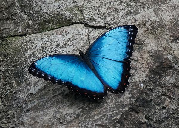 Butterfly wings are inspiring the next generation of solar power