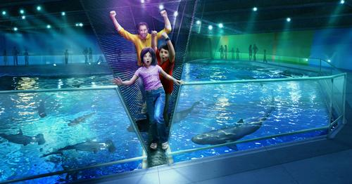 The aquarium will be the first in North America to build a rope bridge over its shark tank / Newport Aquarium