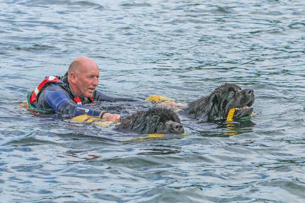 Lewin uses Newfoundland dogs to promote water safety and confidence