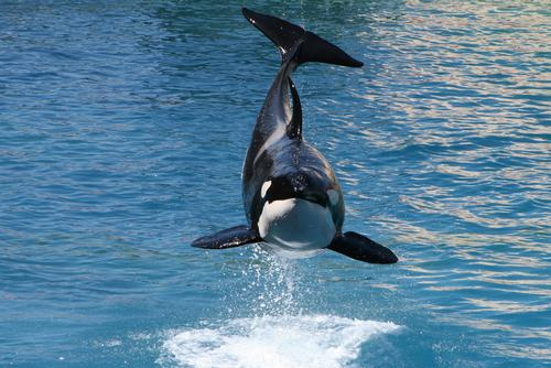 Orcas to be centrepoint of new aquarium at VDNKh in Moscow