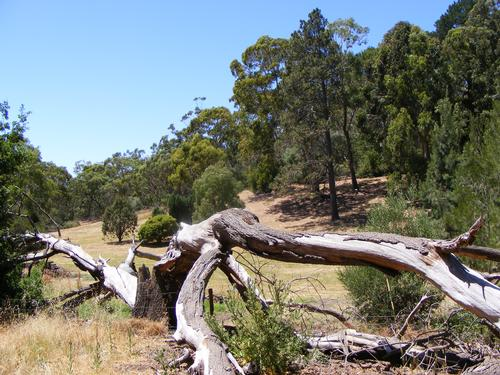 The winning student's class will be taken on a trip to Belair National Park – the competition is part of a wider project to find out what would encourage people to spend more time in national parks