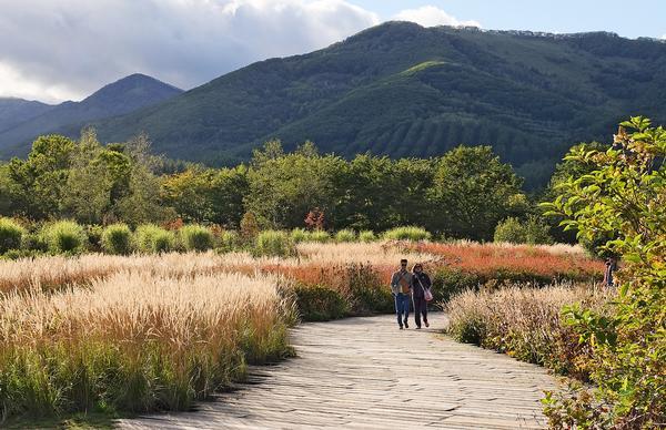 Dan Pearson worked with Japanese landscape designer Fumiaki Takano on Tokachi Millennium Forest