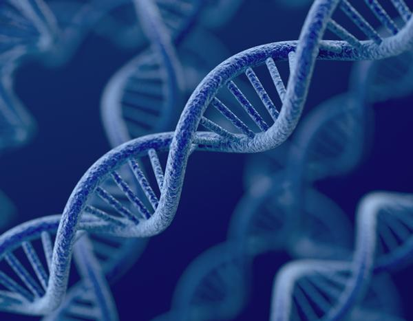 Personalised workouts based on DNA will boost results for members / PhotoS: shutterstock.com